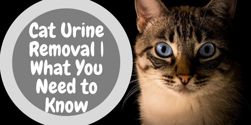 Cat Urine Removal | What You Need to Know