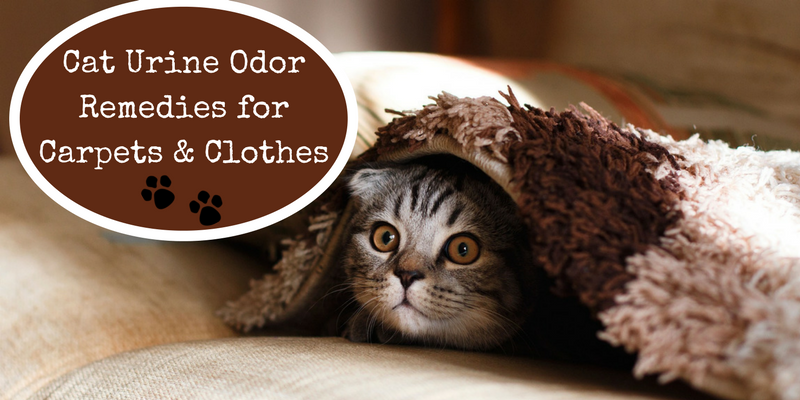 Cat Urine Odor Remedies for Carpets & Clothes