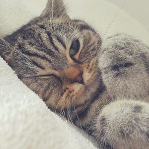 Cat S Pee Smells Like Mildew