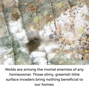 regular mold detection test is imperative
