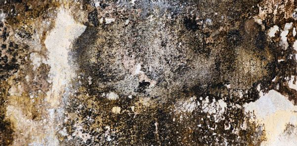 How to Do Mold Detection at Home