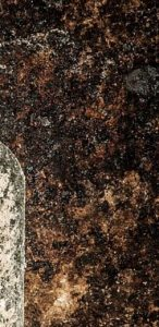 Prioritize Mold Detection for your Family