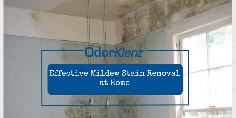 Effective Mildew Stain Removal at Home