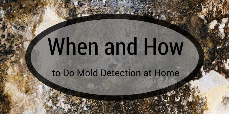 When and How to Do Mold Detection at Home